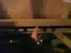 capture_03062012_211945